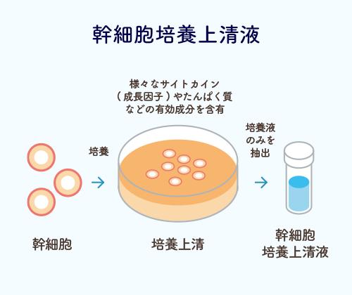 幹細胞培養上清液