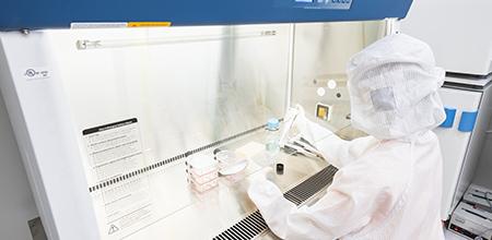 細胞の品質と安全性